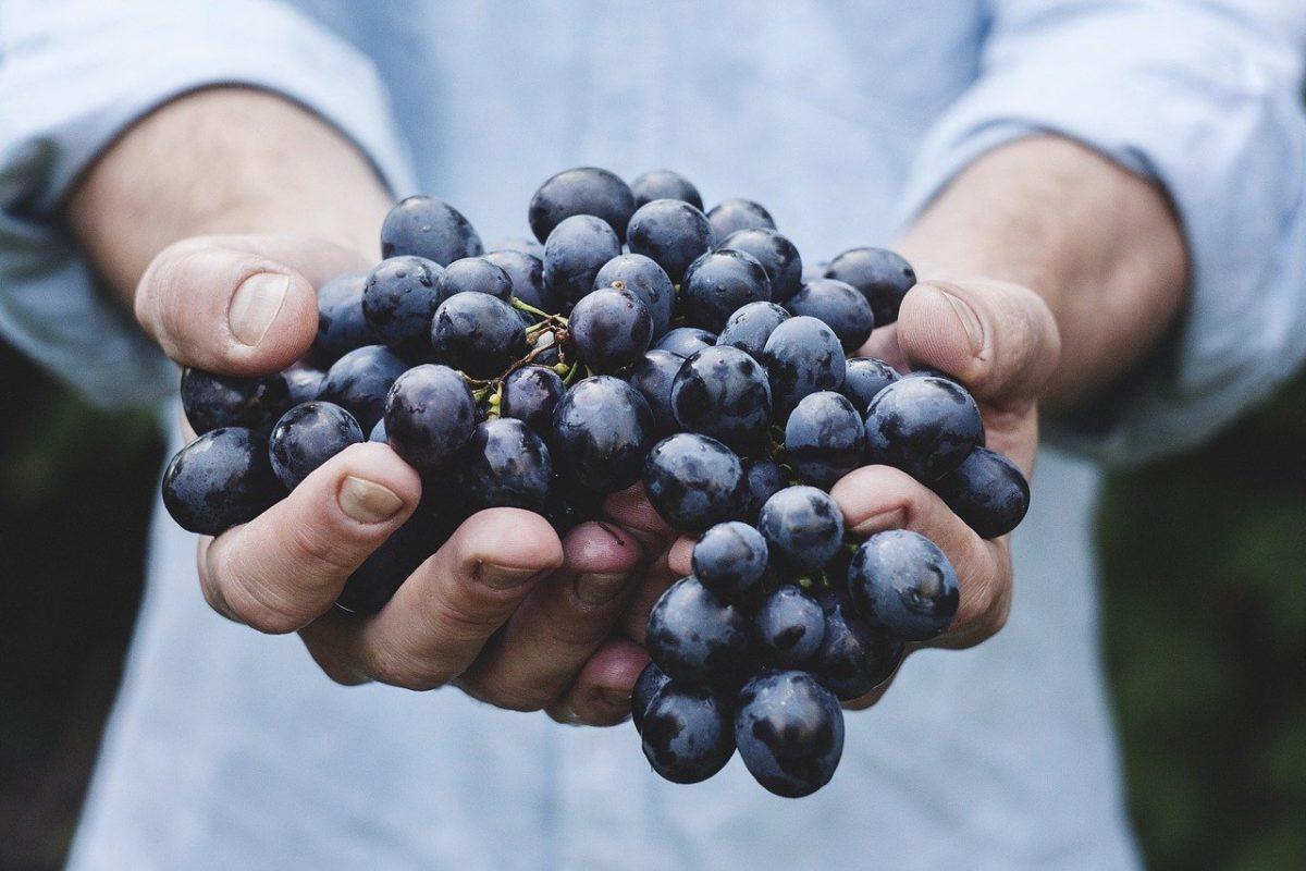Dürfen Hunde Trauben essen?