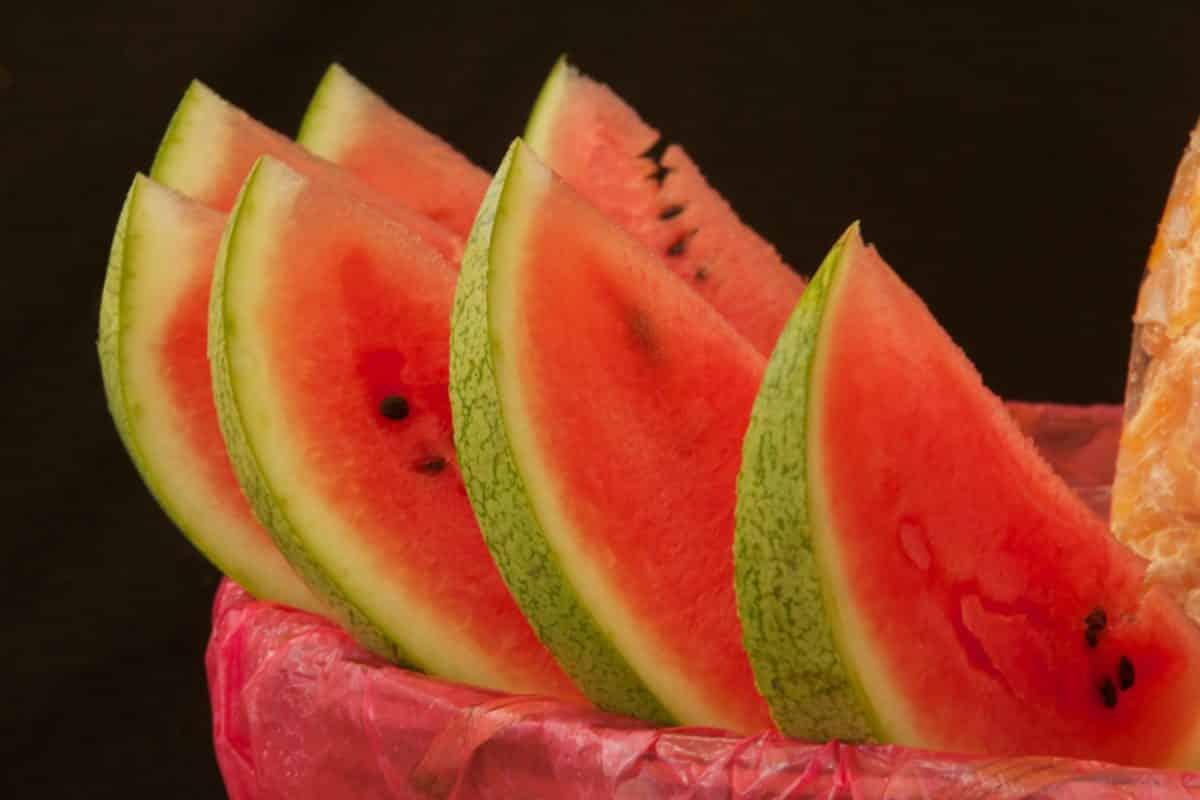 Melone gesund für hunde