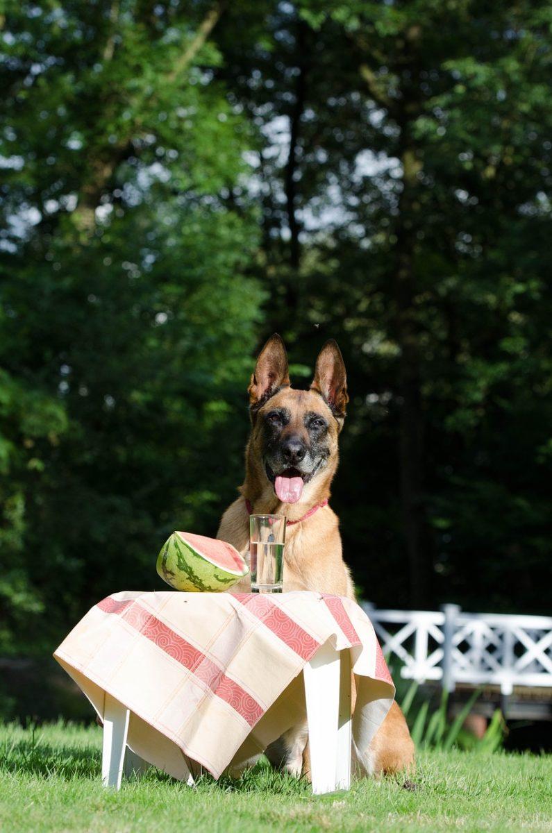 dürfen hunde melone fressen?
