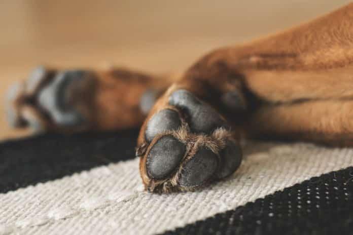 warum lecken hunde ihre pfoten
