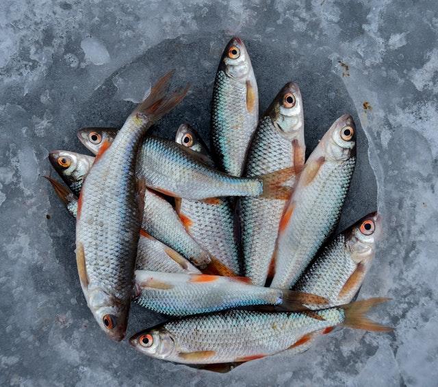 Fisch für Hunde gesund?