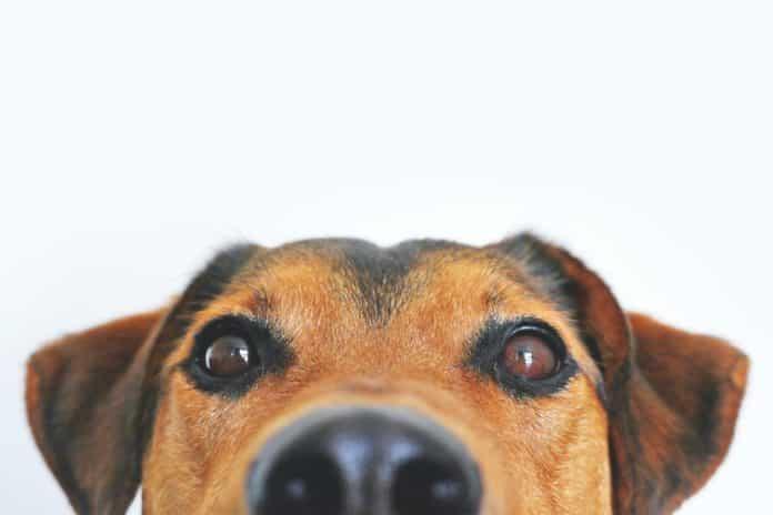 WArum fressen Hunde Kot?