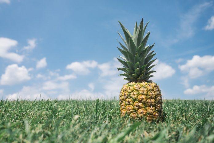 Ananas gesund für hunde?