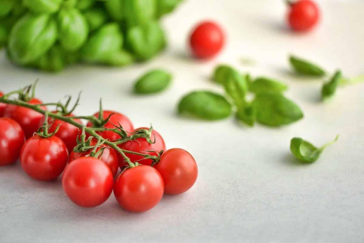 tomaten gesund für hunde?