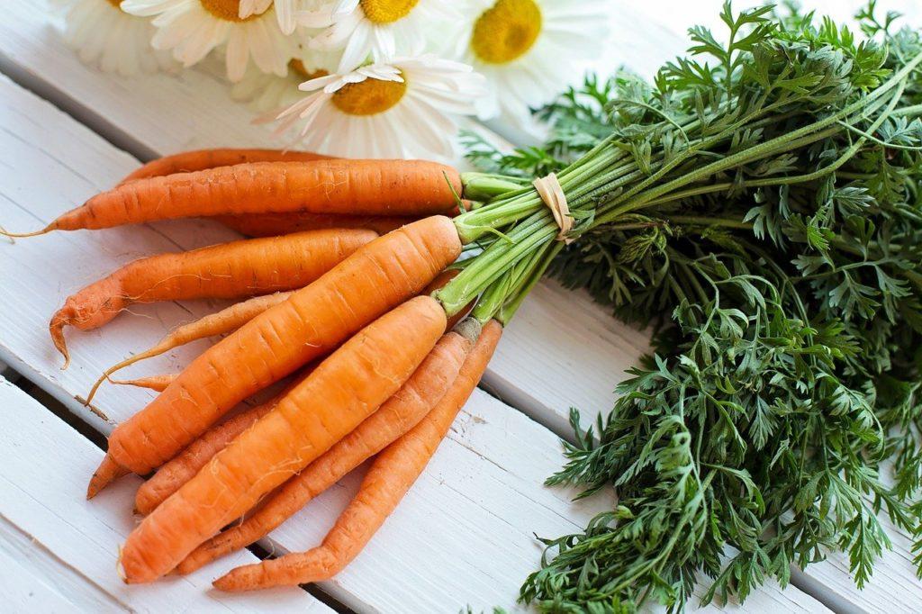 Karotten gesund für Hunde