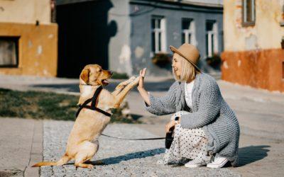 14 Wege wie Ihr Hund Sie liebt, respektiert und Ihnen vertraut