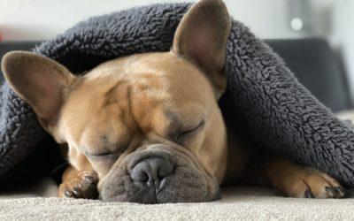 Vertragen Hunde Melatonin? Verwendung, Vorteile und mehr