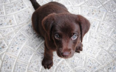 Kompletter Welpentrainingsplan nach Hunde-Alter