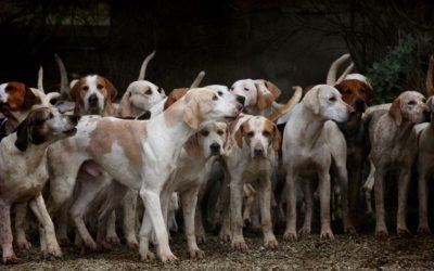 Wie viele Hunderassen gibt es – Die aktuelle Zahl Mai 2021
