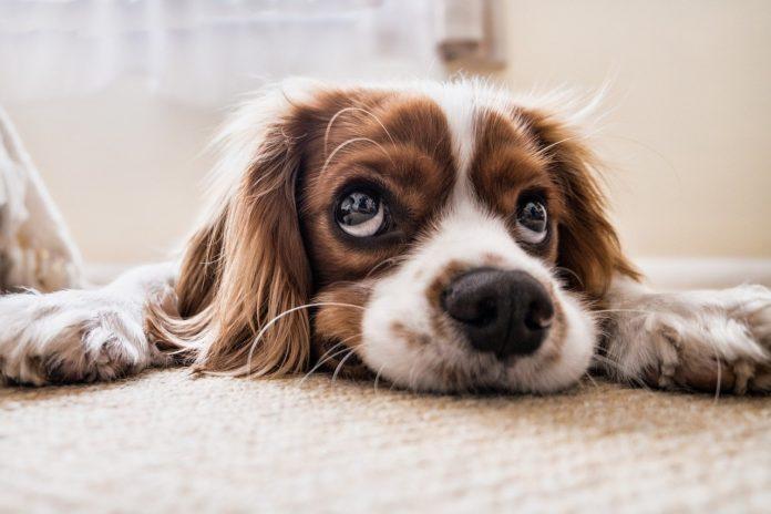 ab wann hund kastrieren