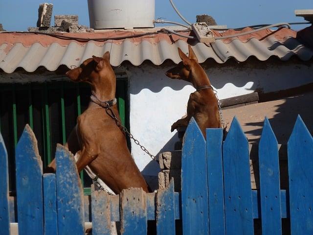 Wie hoch muss ein Zaun für Hund sein?