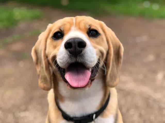 Warum Hunde an Füßen lecken